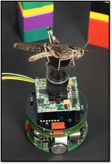 Rind Insect vision | Driverless Cars-1 | Scoop.it