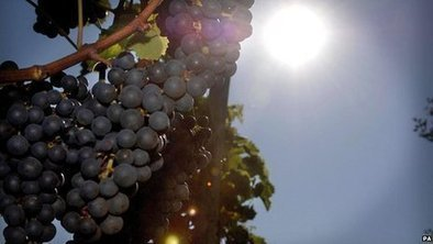 Number of UK wine producers grows | Quirky wine & spirit articles from VINGLISH | Scoop.it