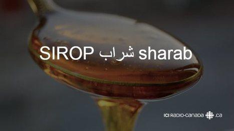 Ces mots arabes que vous utilisez tous les jours | Cultures & Médias | Scoop.it