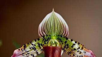 Orchids need ample room to grow - Orlando Sentinel | trackingnews | Scoop.it