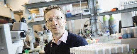 Le PrixLatsisremis au biologiste Richard Benton et ses mouches | EntomoNews | Scoop.it