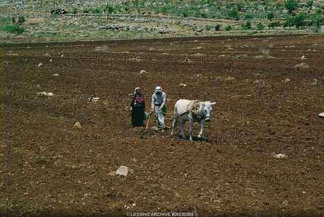 Agriculture in Bible times (explanation) - WebBible Encyclopedia | Occupations in Biblical Times | Scoop.it