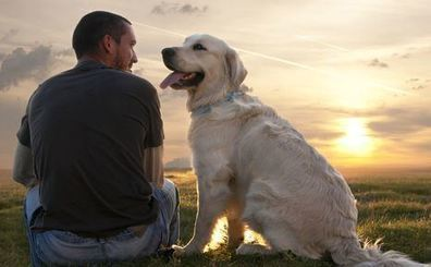 Pet Animals helps in Depression | Kids & Psychology | Scoop.it