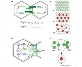 ScienceDirect.com - Trends in Cell Biology - Two-dimensional spatial patterning in developmental systems | plant cell genetics | Scoop.it