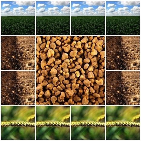 Qu'est ce que l'agroécologie ? - Sciences - France Culture | Agriculture Biologique | Scoop.it
