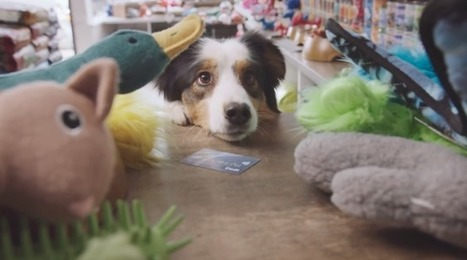 Canadian Banking Ad Asks, What If Dogs Had Their Own Debit Cards? | Public Relations & Social Media Insight | Scoop.it