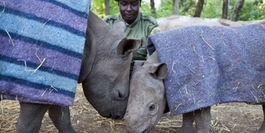 Stop the airing of Red Bull's rhino poaching commercial in South Africa | Save threatened and endangered species | Scoop.it