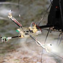 Oeil bio-inspiré : le tout premier robot à voler sans accéléromètre grâce à son oeil bio-inspiré | Biomimétisme Biomimicry | Scoop.it