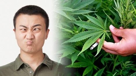 Los enfermos mentales consumen siete veces más cannabis que la media | Salud Press Chile | Scoop.it