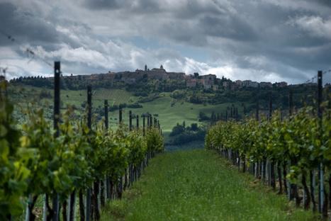 O Verdicchio, Verdicchio!  Wherefore Art Thou? | Wines and People | Scoop.it