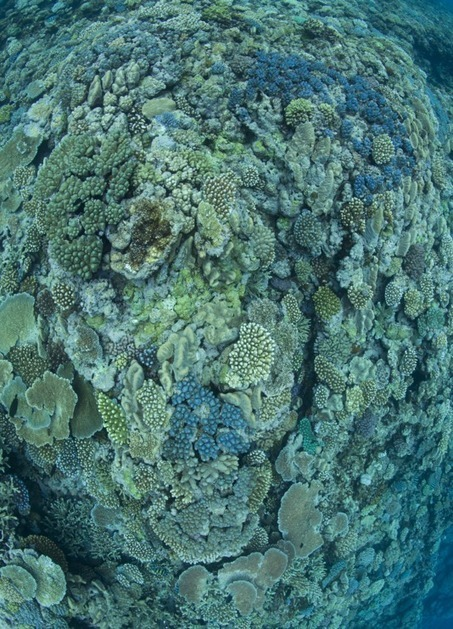 Péril acide sur les coraux | Politiques environnementales | Scoop.it