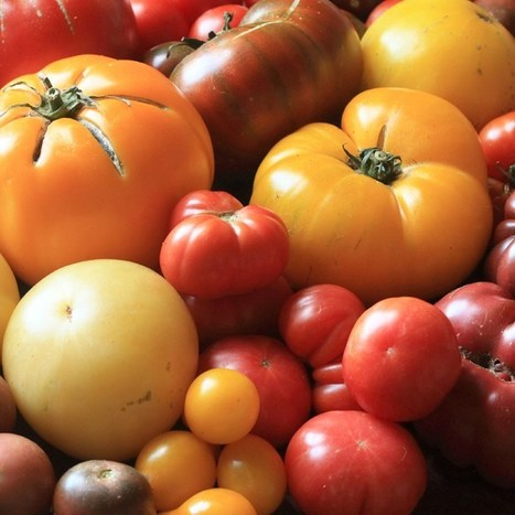 Tomato chemists crowdsource the best flavours (Wired UK) | @FoodMeditations Time | Scoop.it