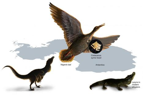 Oldest Known Squawk Box Suggests Dinosaurs Likely Did Not Sing | Amazing Science | Scoop.it