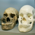 The secret language of skulls - The Week Magazine   Historia Universal   Scoop.it
