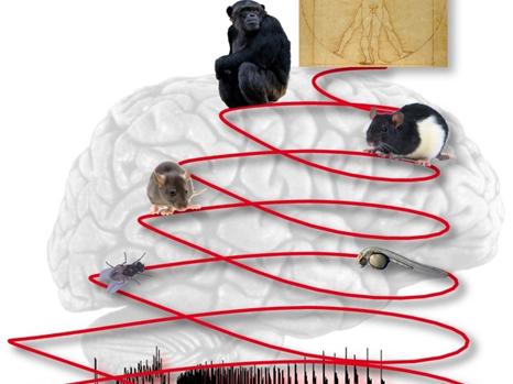 La crise d'épilepsie : une activité primitive du cerveau dont les mécanismes sont conservés à travers les espèces | EntomoNews | Scoop.it