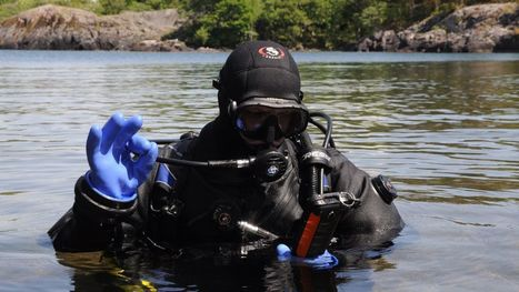 Scuba divers can now post to Facebook from the bottom of the ocean | ScubaObsessed | Scoop.it