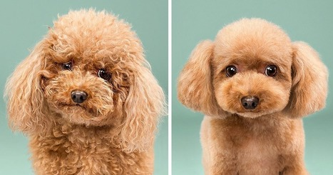 Dogs Before And After Their Haircuts (16 Pics) | Food for Pets | Scoop.it