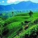 Cheap direct charter flights from London to Sri Lanka for £219! | Don Eddy's Scoop | Scoop.it