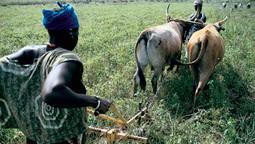 Agitation autour de l'intensification de l'agriculture | Nourrir la planète... autrement | Scoop.it