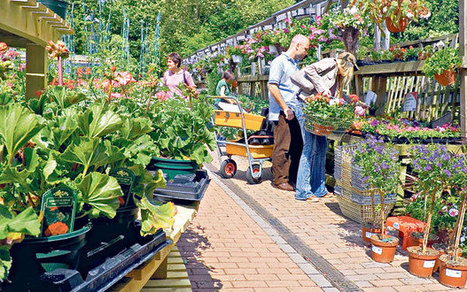 Why supermarkets are jumping on the gardening bandwagon - Telegraph   Annie Haven   Haven Brand   Scoop.it