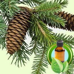 Gurjun Balsam ESSENTIAL OIL | Essential-Oils | Scoop.it