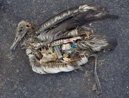 L'horreur plastique | Développement durable pour les entreprises et les collectivités | Scoop.it