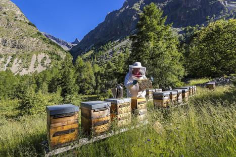 Biodiversité : que font vraiment les entreprises ? | Environnement et DD | Scoop.it