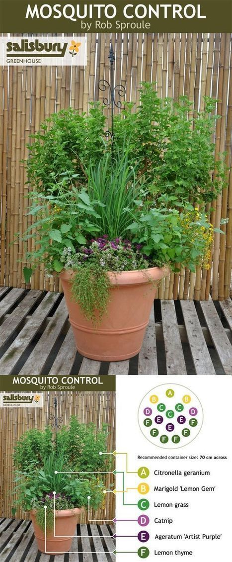 Plants for mosquito control | Backyard Gardening | Scoop.it