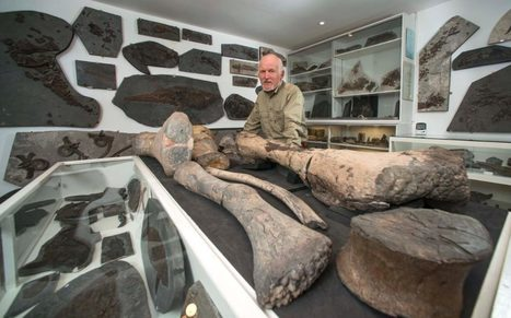 Amateur fossil hunter who spent 30 years amassing 2,000 specimens wins grant to build £5m Jurassic Coast museum | ScubaObsessed | Scoop.it