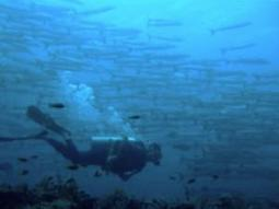 Trapped for three days under the sea - Africa | IOL News | IOL.co.za | All about water, the oceans, environmental issues | Scoop.it
