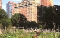 Hoe gaat een miljoenenstad om met stadslandbouw? | Tuinieren | Scoop.it