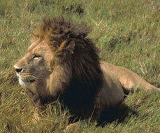 NBC Universal Asked to Drop Trophy Hunting Programming | How to Scoop.it! | Scoop.it