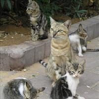 Wild Cat Gang Keeps Lost Boy Alive   Linda w   Scoop.it