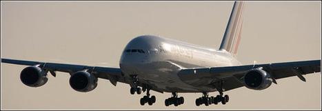 5 conseils pour prendre l'avion avec votre animal | Actu Tourisme | Scoop.it