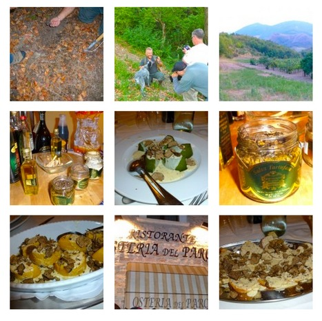 Truffle Season in Le Marche | On the Truffle Trail in Le Marche | Le Marche another Italy | Scoop.it