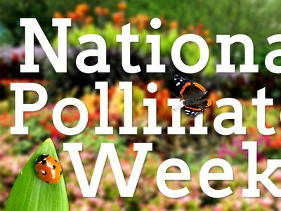 4 Ways to Participate in National Pollinator Week | Vertical Farm - Food Factory | Scoop.it
