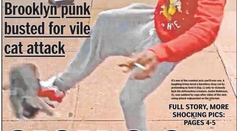 New York : un homme maltraite un chat et devient la cible des internautes | CaniCatNews-actualité | Scoop.it