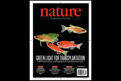 Zebrafish reveal drugs that may improve bone marrow transplant | Amazing Science | Scoop.it