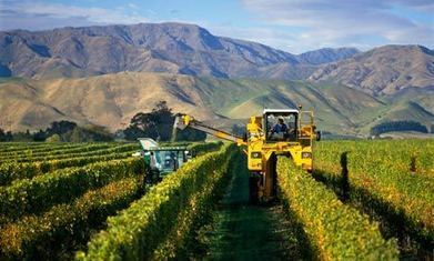 Climate change will threaten wine production, study shows | Climate & Clean Air Watch | Scoop.it