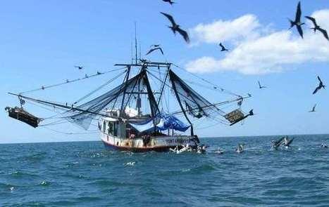 Japão doa 65000€ para fomentar pesca semi-industrial em Porto Alegre | São Tomé e Príncipe | Scoop.it