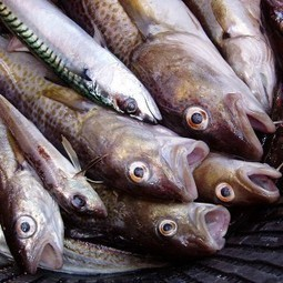 Mass Fish Deaths: Millions Have Been Found Dead All Over The World In The Past Month | InvestmentWatch | Water Stewardship | Scoop.it