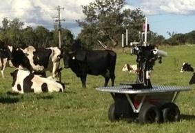 Robot cowboys get cows moooving on the range - CNET | Robotics | Scoop.it