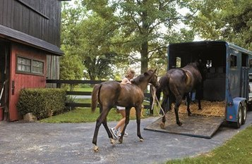 Preparedness is Key to Surviving Tornadoes with Horses | From the Equine Blogosphere | Scoop.it