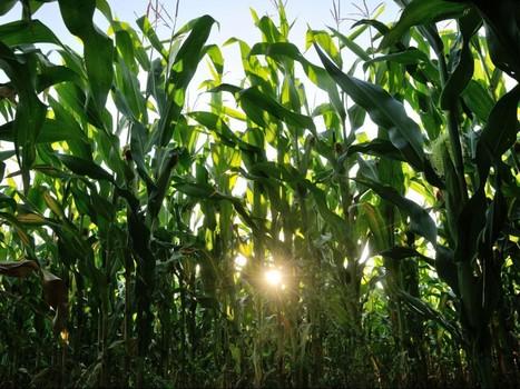 Crise des céréales: «Après les subprimes, on spécule sur la nourriture»   Questions de développement ...   Scoop.it