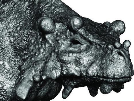 Le lézard de la taille d'une vache qui arpentait seul le désert il y a 250 millions d'années | Aux origines | Scoop.it