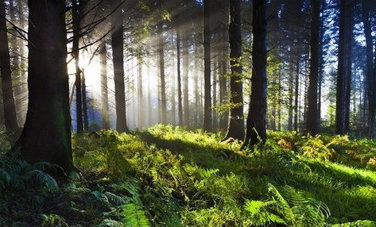 21 Reasons Why We Need Forests | Healing our planet | Scoop.it