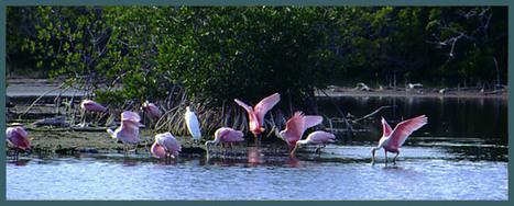 Atracciones en la reserva de Everglades   Parque Nacional Everglades de Florida USA   Scoop.it