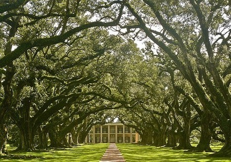Favorite Places I have lived/visited via Evelyn | Oak Alley Plantation: Things to see! | Scoop.it
