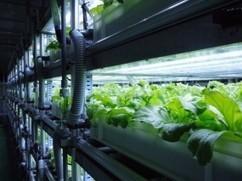 完全閉鎖型植物工場にて健康食品の原料アイスプラント末・グラシトールを量産化。サプリメント商品の販売へ(日本アドバンストアグリ) | PlantFactory | Scoop.it