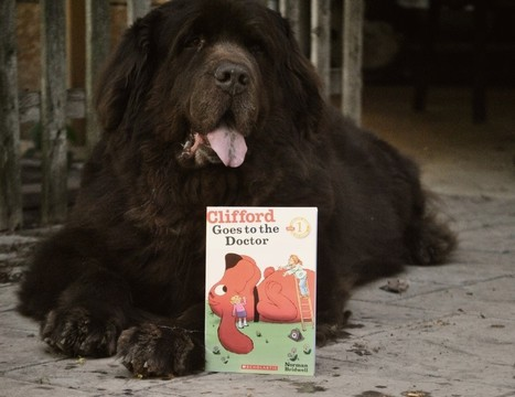 4 Common Myths About Dogs and Ticks - mybrownnewfies.com | Modern dog training methods and dog behavior | Scoop.it